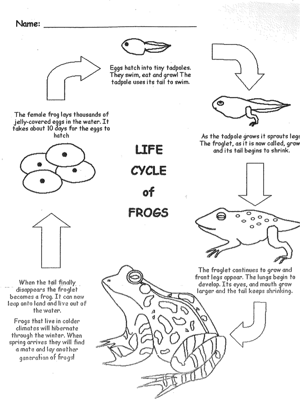 day 5 life cycles of a frog elementary life cycles. Black Bedroom Furniture Sets. Home Design Ideas